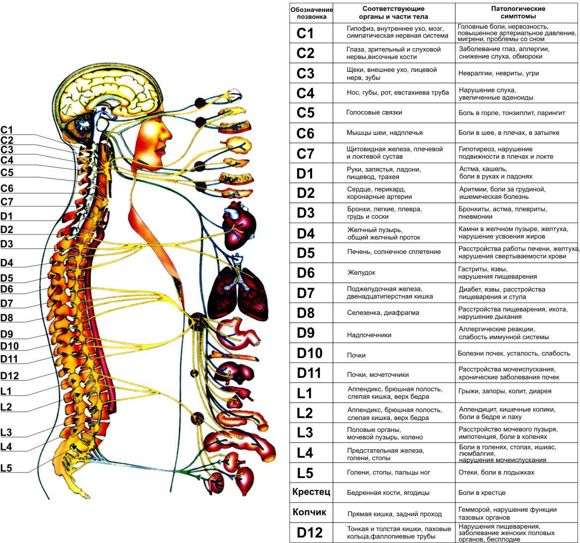 Остеохондроз спины народные методы лечения